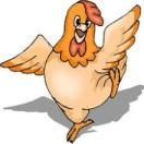 ayam kartun